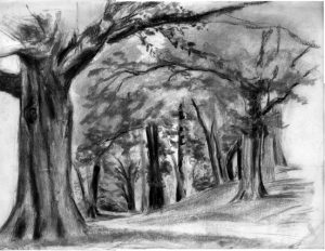 image of drawings of trees along the Fenway